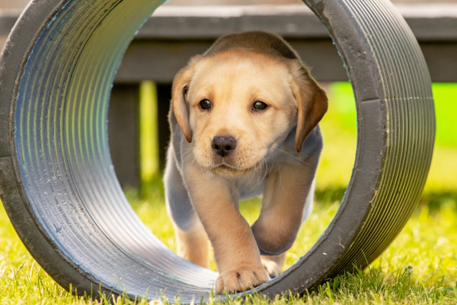 Help Guide Dogs with a charity gift