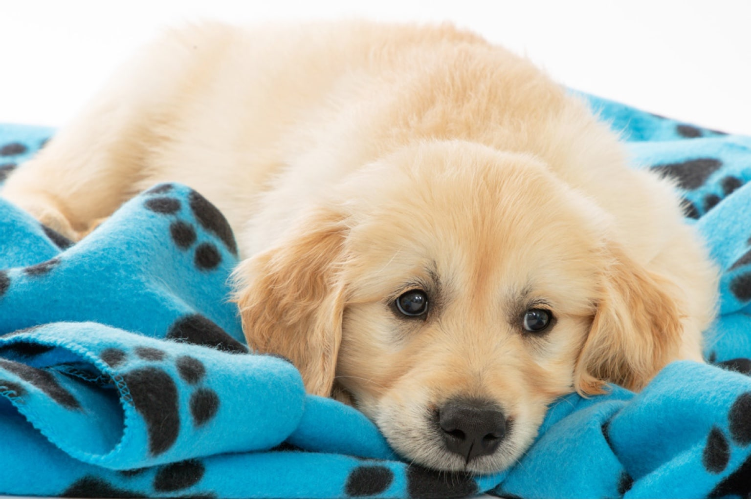 Support Guide Dogs