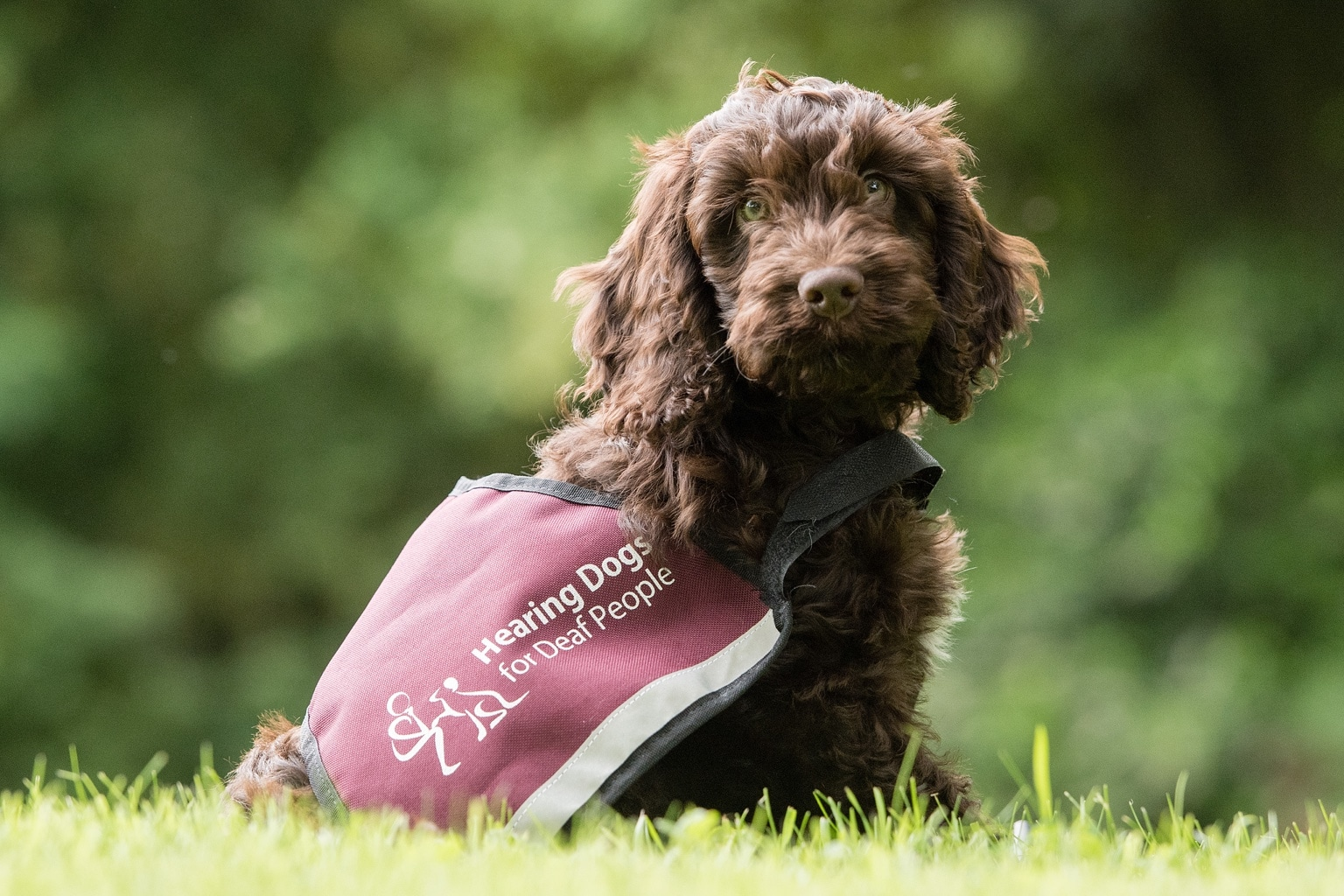 Support Hearing Dogs For Deaf People