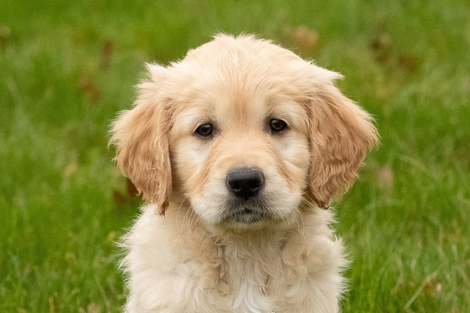 Sponsor a Puppy Judy