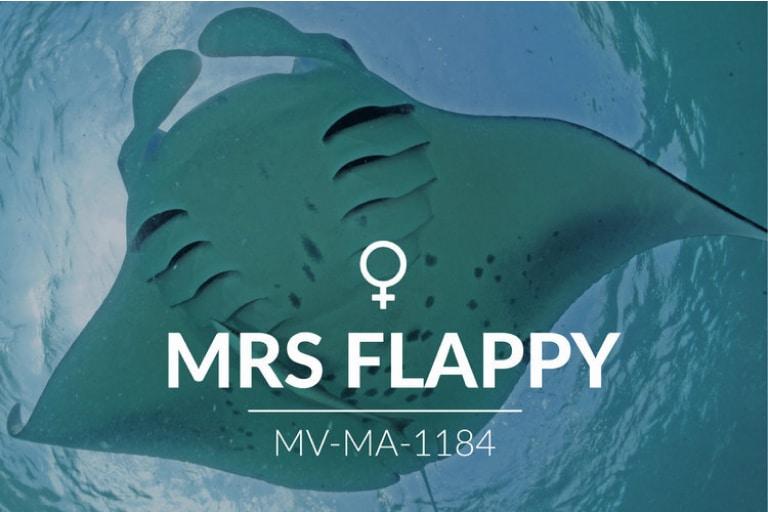 Adopt a Manta – Mrs Flappy